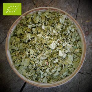 Braamblad - Rubus fruticosus