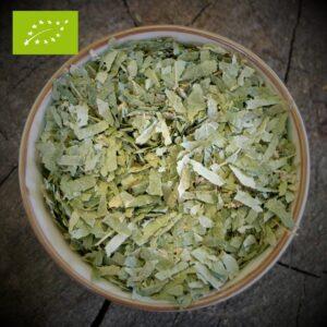 Berkenblad - Betula Alba