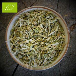 Passiebloem - Passiflora incarnata