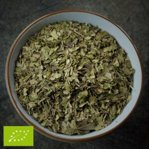 Citroenmirte - Backhousia citriodora