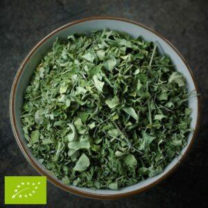 Moringa - Moringa oleifera
