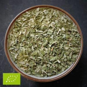 Olijf blad - Olea Europaea